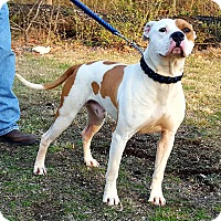 Adopt A Pet :: Samson - Somonauk, IL
