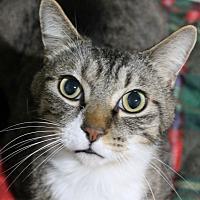 Adopt A Pet :: Watkins - Troy, MI