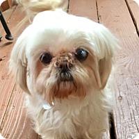 Adopt A Pet :: Bunny - Atlanta, GA