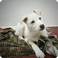 Adopt A Pet :: AVA - North Vancouver, BC