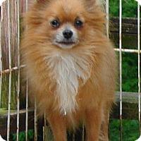 Adopt A Pet :: #48 Brady - Festus, MO