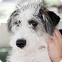 Adopt A Pet :: Dakota - Mission Viejo, CA