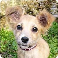 Adopt A Pet :: Noelle - Mocksville, NC