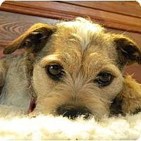 Adopt A Pet :: Webster - Rigaud, QC