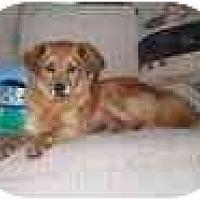 Adopt A Pet :: Emmie - Chesapeake, VA