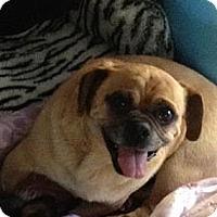 Adopt A Pet :: Homer - Anaheim, CA