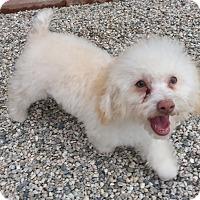 Adopt A Pet :: Copper - Acton, CA