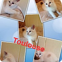 Adopt A Pet :: Toulouse - McDonough, GA