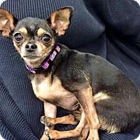 Adopt A Pet :: Odessa - Encino, CA
