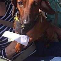 Adopt A Pet :: BRUNO #1 - Lubbock, TX