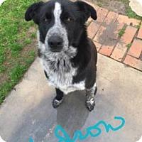 Adopt A Pet :: HUDSON - Gustine, CA