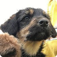 Adopt A Pet :: Tara - Indianapolis, IN