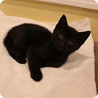 Adopt A Pet :: Tommy - Yardley, PA