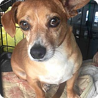 Adopt A Pet :: Cooper - Loudonville, NY