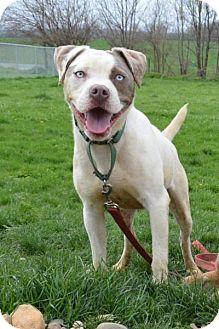 Terrier (Unknown Type, Medium) Dog for adoption in Lacon, Illinois - Pebbles
