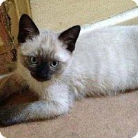 Adopt A Pet :: Yin - Fullerton, CA
