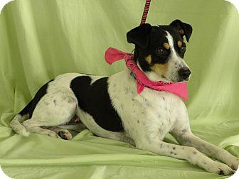 Fox Terrier (Smooth) Mix Dog for adoption in Princeton, Kentucky - Pandora