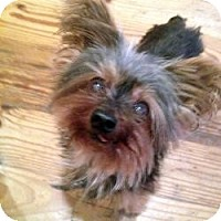 Adopt A Pet :: Nuggett - West Palm Beach, FL