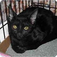 Adopt A Pet :: Celia - Colmar, PA