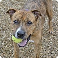 Adopt A Pet :: Camo - Meridian, ID