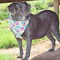 Weimaraner Mix Dog for adoption in Iola, Texas - Marnie