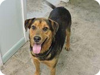 German Shepherd Dog/Labrador Retriever Mix Dog for adoption in Cottonport, Louisiana - Abel