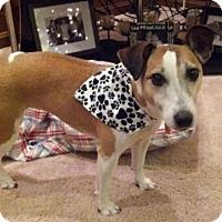 Adopt A Pet :: Molly in Dallas - Austin, TX