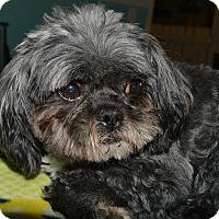Adopt A Pet :: Smitty - Prole, IA