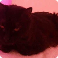 Adopt A Pet :: Sherry - london, ON