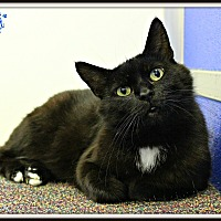 Adopt A Pet :: Moffit - Dunkirk, NY