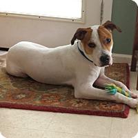 Adopt A Pet :: Sparky - Homewood, AL