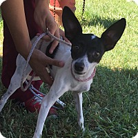Adopt A Pet :: Winston Rockport - Norwalk, CT