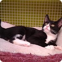 Adopt A Pet :: Henrietta - Richmond, VA