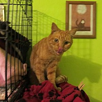 Adopt A Pet :: Rambler - Coos Bay, OR
