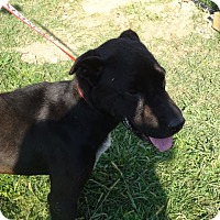 Hound (Unknown Type) Mix Dog for adoption in Delaware, Ohio - Harley