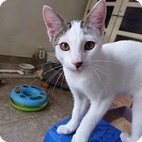 Adopt A Pet :: Atticus - Mission Viejo, CA