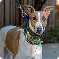 Adopt A Pet :: Mary - Walnut Creek, CA
