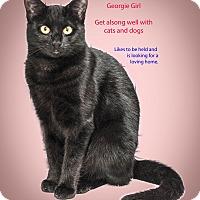Adopt A Pet :: Georgie Girl - Staten Island, NY