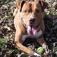Adopt A Pet :: Wes - Dearborn, MI
