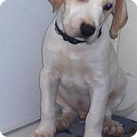 Adopt A Pet :: Bryant - Burgaw, NC