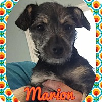 Adopt A Pet :: Marion - Enid, OK