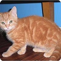 Adopt A Pet :: Scotty - Warren, MI