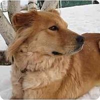 Adopt A Pet :: Nouki - Rigaud, QC