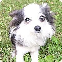 Adopt A Pet :: Greystoke - Mocksville, NC