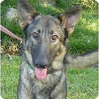 Adopt A Pet :: Tess - Pike Road, AL