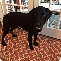 Adopt A Pet :: Zorro - Cumming, GA