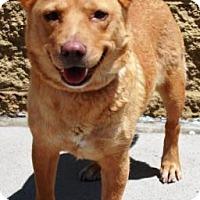 Adopt A Pet :: Caydence - Gilbert, AZ