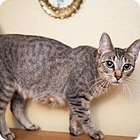 Adopt A Pet :: Courage - Shelton, WA