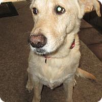 Adopt A Pet :: Duchess - Jacksonville, FL