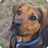 Adopt A Pet :: Dixie - Ravenel, SC